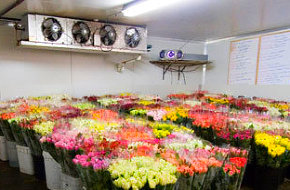 Coolrooms for Florists Market Gardens